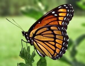 Read more about the article <!--:en-->Guardian of the Fauna<!--:--><!--:pt-->Guardião da Fauna<!--:-->
