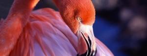 Read more about the article <!--:en-->Company friend of the Fauna<!--:--><!--:pt-->Empresa Amiga da Fauna<!--:-->
