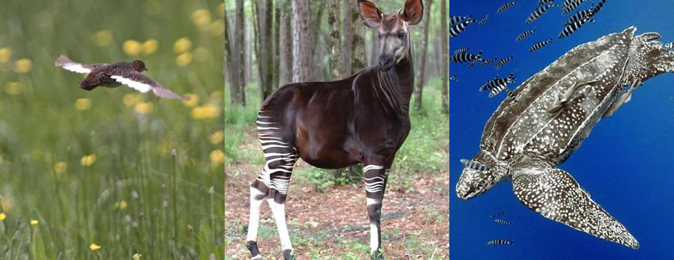 You are currently viewing Portal Globo.com – G1 Organização inclui novos animais na lista de ameaçados de extinção