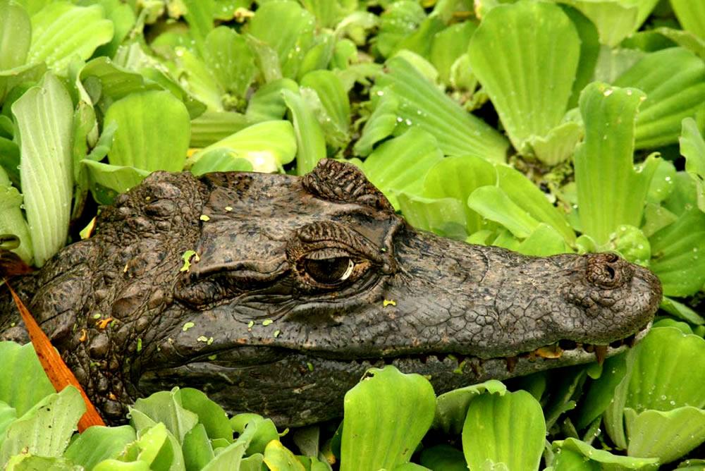 Read more about the article 1° Relatório Nacional Sobre Gestão e Uso Sustentável da Fauna Silvestre