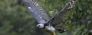 Read more about the article Fotógrafo de National Geographic é premiado no HBW – World Bird Photo Contest