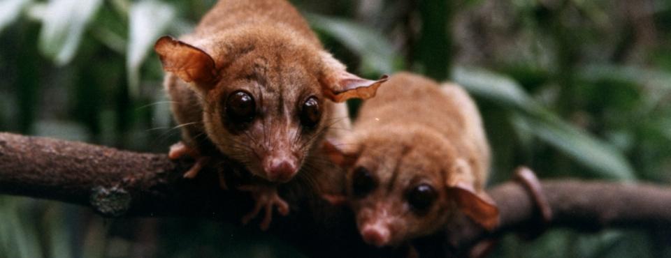 Read more about the article Monitoramento Permanente do Tráfico de Animais Silvestres Online