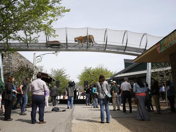 Passarela fica a quatro metro de altura do público na entrada principal do zoo. Foto: Matt Slocum/AP