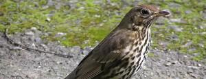 Read more about the article Estudo aponta que ondas de rádio afetam aves migratórias
