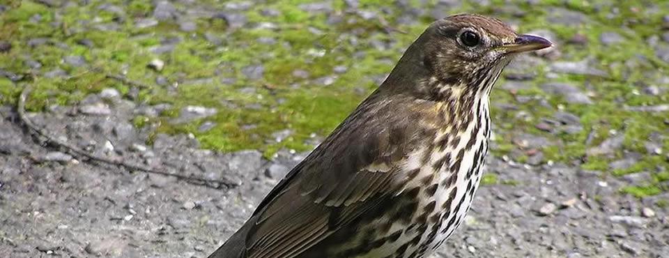 You are currently viewing Estudo aponta que ondas de rádio afetam aves migratórias