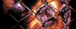 Read more about the article Campanha de Combate ao Comércio Ilegal de Animais Silvestres