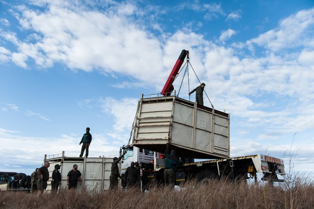 Contêiner é erguido até a traseira de um caminhão para o transporte do rinoceronte a ser realocado no parque. Foto: Stefan Heunis/AFP
