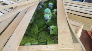 PMA vai encaminhar os animais ao CRAS.  Foto: PMA/ Divulgação