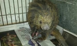 Animais silvestres que sobreviveram às chamas foram resgatados.  Foto: Divulgação