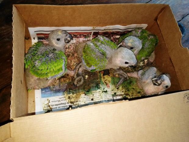 Filhotes foram encontrados na MS-306. Foto: PMA/Divulgação