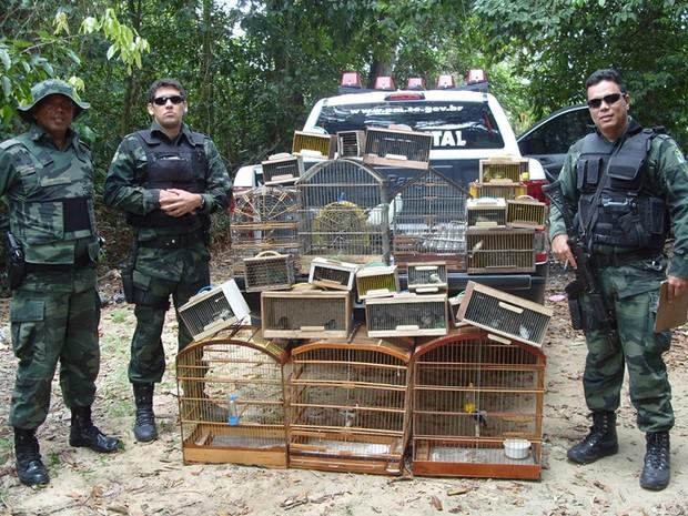 Quase 120 aves silvestres são apreendidas em duas feiras livres. Foto: Pelotão Ambiental / Divulgação