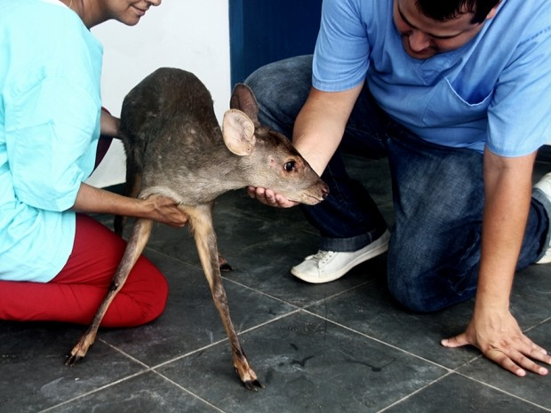 Animal está sendo tratado no Centro de Zoonoses de Peruíbe. Foto: Marcos Costa / Prefeitura de Peruíbe