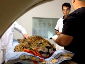 Exame foi feito na manhã desta quinta (4) em clínica de Francisco Beltrão (PR). Foto: Michelli Arenza / RPC TV