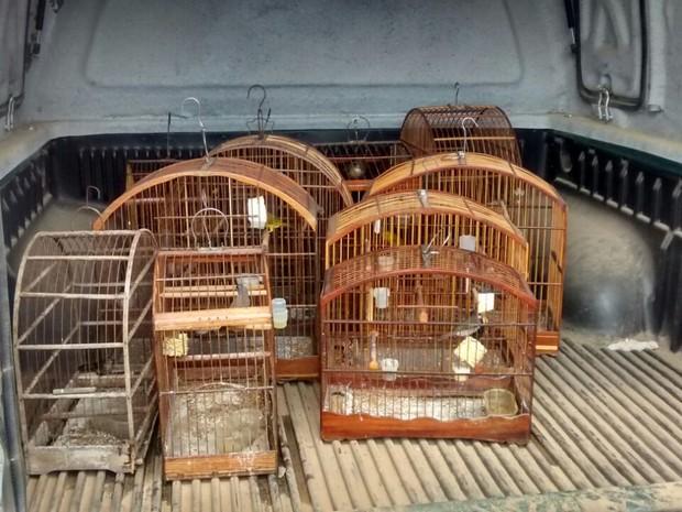 Pássaros apreendidos em Itaboraí, RJ. Foto: Divulgação/Disque-Denúncia