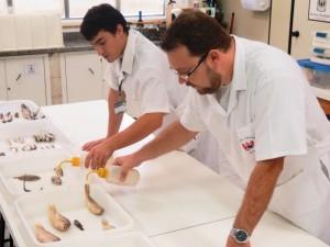 Pesquisadores de Santos encontraram novas espécies no estuário. Foto: Orion Pires / G1