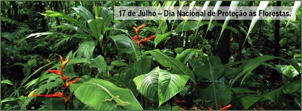 dia_floresta