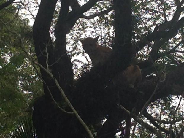 Animal pode ter chegado à casa em busca de comida. Foto: Arquivo Pessoal/ Luiz Paulo Amaral