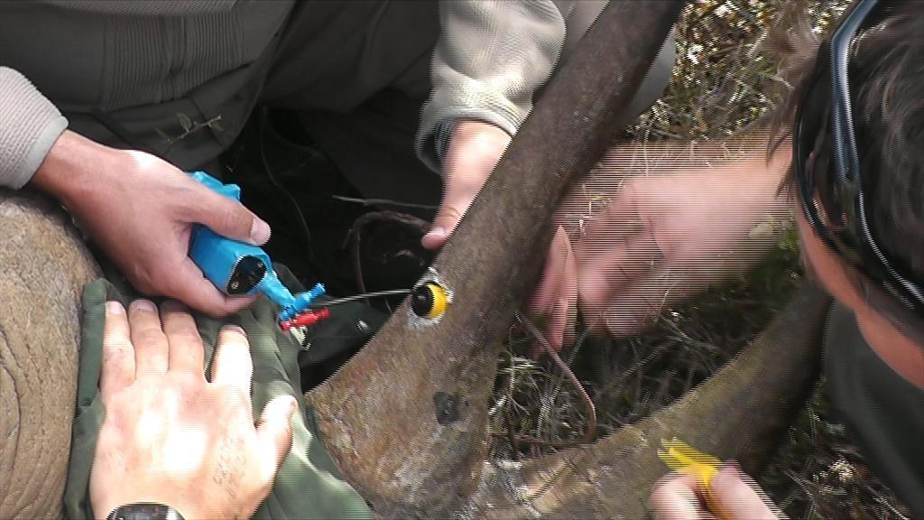 Objetivo das câmeras é proteger os animais da caça predatória. Foto: Reprodução/BBC