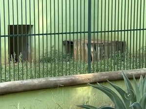 Muitos espaços para animais estão vazios e com mato alto. Foto: Reprodução/TV TEM