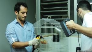 Foto: Segundo pesquisador Roched Seba, do Instituto Vida Livre, animal demorou três dias para se adaptar à prótese.