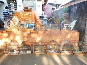 Gaiolas onde os pássaros eram mantidos em cativeiro. Foto: Divulgação / Polícia Ambiental