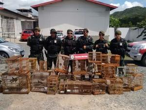 Aves foram apreendidas durante operação. Foto: Divulgação/Polícia Ambiental