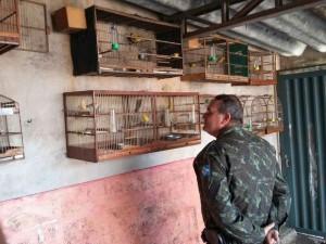 Apreensão de aves em Limeira. Foto: GM de Limeira/Divulgação