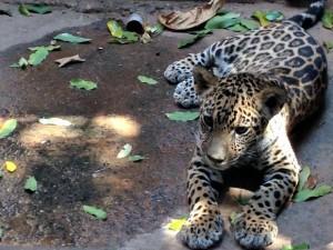 Dingo tem cinco meses e pesa cerca de 8 kg. Foto: Cristina Mayumi/ TVCA