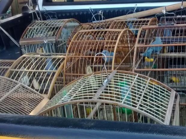 Animais passarão por avaliação no Nepas para serem devolvidos à natureza. Foto: Divulgação/ GM