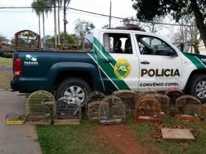 Polícia Ambiental apreendeu 110 pássaros silvestres nesta terça (18). Foto: Divulgação/Polícia Ambiental