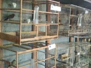 Pássaros estavam em gaiolas sujas e não havia água e nem comida necessária para todos os animais. Foto: Divulgação/Polícia Militar Ambiental