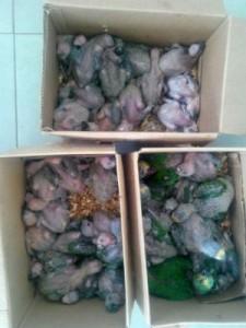 Aves resgatadas foram levadas a um viveiro. Foto: Divulgação/PRF