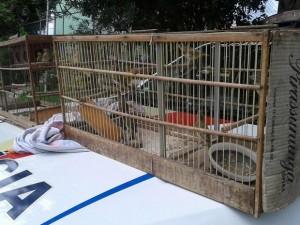 Gaiolas com canários apreendidos pela PM na DF-180, em Samambaia. Foto: Polícia Militar/Divulgação