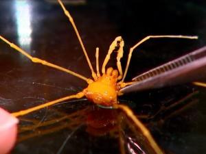 Espécie foi encontrada em cavernas da região de Monjolos, em Minas Gerais. Foto: Reprodução EPTV