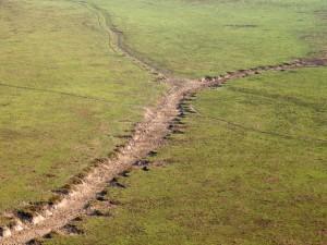 Manada causa destruição na vegetação da reserva florestal em Rondônia. Foto: Sedam/Divulgação