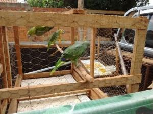 Aves foram apreendidas na capital após denúncia anônima. Foto: Divulgação/PM