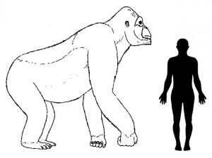 Ilustração reconstitui dimensões aproximadas do Gigantopithecus. Foto: H. Bocherens/Senckenberg