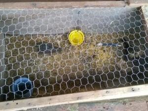 Pássaros estavam em cativeiro. Foto: Divulgação / Polícia Ambiental