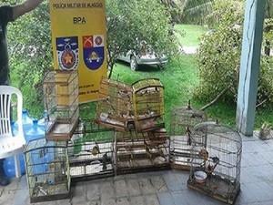 Animais estavam sendo mantidos em cativeiro em Atalaia. Foto: Divulgação/ BPA