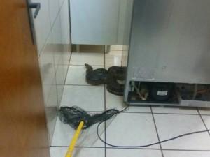 Cobra foi encontrada por moradores no motor da geladeira. Foto: Reprodução / Site VotuNews