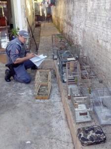No local ainda havia diversas gaiolas. Foto: Polícia Ambiental/Cedida