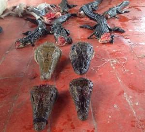 Embarcação fazia o transporte ilegal de animais silvestres mortos e vivos. Foto: Divulgação/ Polícia Civil