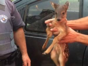 Animal foi encaminhado para clínica veterinária. Foto: Polícia Militar/Divulgação