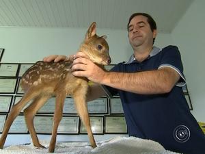 Bambina se tornou mascote de clínica veterinária. Foto: Reprodução/TV TEM