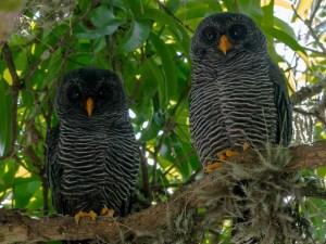 Aves foram observadas por pesquisadores. Foto: Hudson Martins/Arquivo Pessoal
