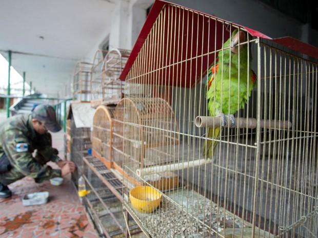 12 pássaros silvestres foram apreendidos na ação (Foto: Cris Oliveira/PMBM)