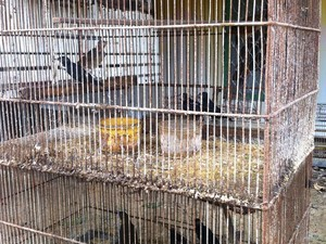 Gaiolas com aves de várias espécies foram apreendidas. Foto: Polícia Ambiental/Divulgação