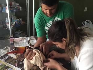 Veterinários examinam tucano achado com bico quebrado no jardim de casa do DF. Foto: Gabriella Terra/Arquivo Pessoal