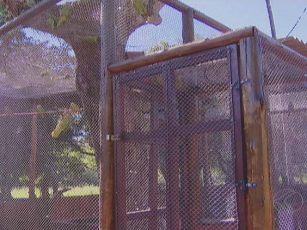 Viveiro recebeu 40 papagaios em outubro do ano passado em Araguari. (Foto: Reprodução/TV Integração)