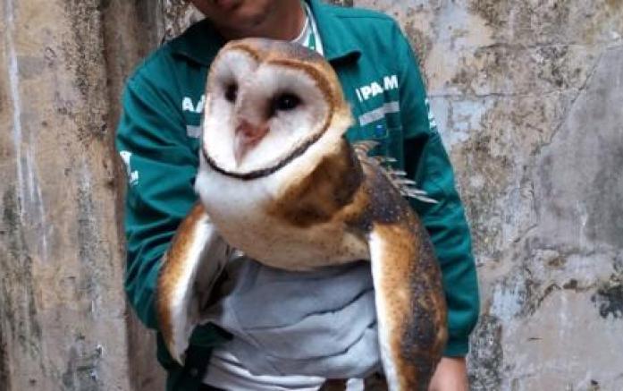 Veterinário destaca que os animais  selvagens resgatados em áreas residenciais sofrem impactos gerados pela ação humana. Foto: Raquel Lima/Ipaam/Divulgação